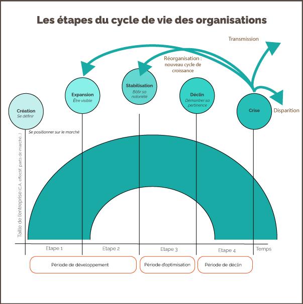 Cycle organisationnel de l'entreprise
